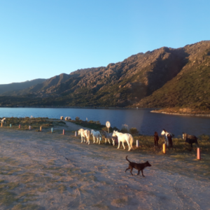 Rancho Chico cabalgatas